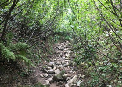 Forêt d'aulnes